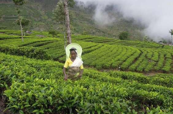 SRÍ LANKA - Kouzlo jiskřivého ostrova